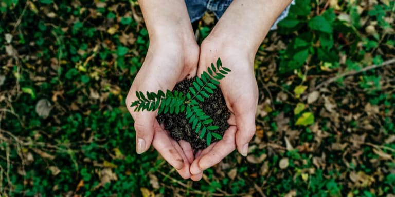 A woman's hands gently holding a tree seedling over fertile ground.