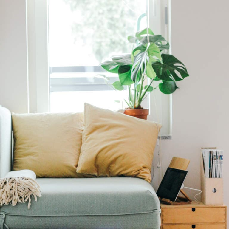 Living area of a home showing a blue sofa with pale yellow cushions against a small window with a delicious monster planter on the window sill.